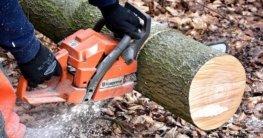 Holzfaellarbeiten